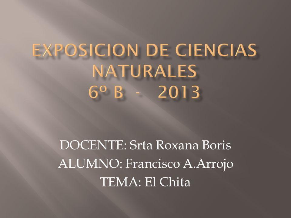 DOCENTE: Srta Roxana Boris ALUMNO: Francisco A.Arrojo TEMA: El Chita