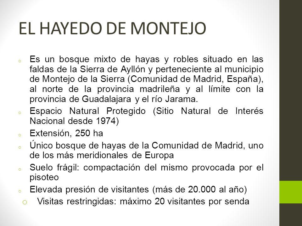 EL HAYEDO DE MONTEJO o Es un bosque mixto de hayas y robles situado en las faldas de la Sierra de Ayllón y perteneciente al municipio de Montejo de la Sierra (Comunidad de Madrid, España), al norte de la provincia madrileña y al límite con la provincia de Guadalajara y el río Jarama.