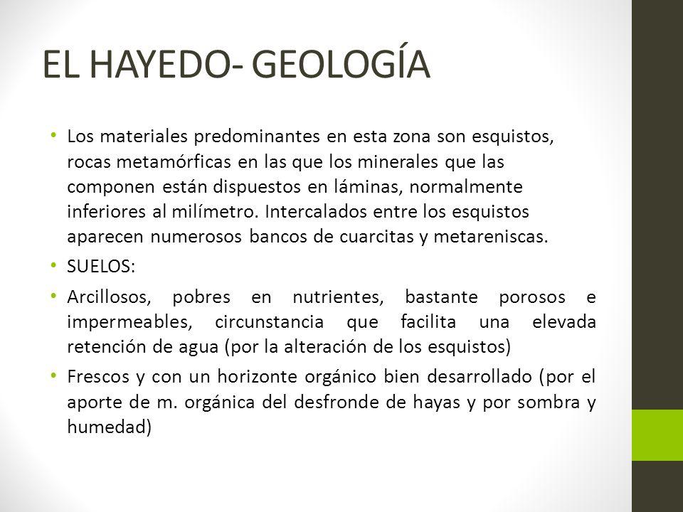 EL HAYEDO- GEOLOGÍA Los materiales predominantes en esta zona son esquistos, rocas metamórficas en las que los minerales que las componen están dispuestos en láminas, normalmente inferiores al milímetro.