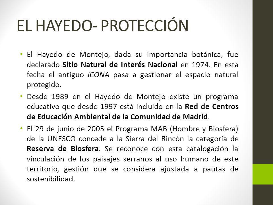 EL HAYEDO- PROTECCIÓN El Hayedo de Montejo, dada su importancia botánica, fue declarado Sitio Natural de Interés Nacional en 1974.