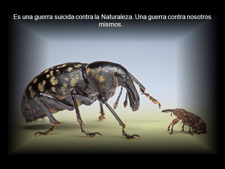 Cada día son más abundantes los datos científicos que nos muestran que vivimos literalmente inmersos en una inconcebible cantidad de bacterias y virus (16, 17) que cumplen funciones esenciales en todos los ecosistemas (18, 19) y que han cumplido papeles fundamentales en los procesos de la evolución de la vida (20, 21), y que su aspecto patógeno es el resultado de alguna desestabilización de sus funciones naturales.