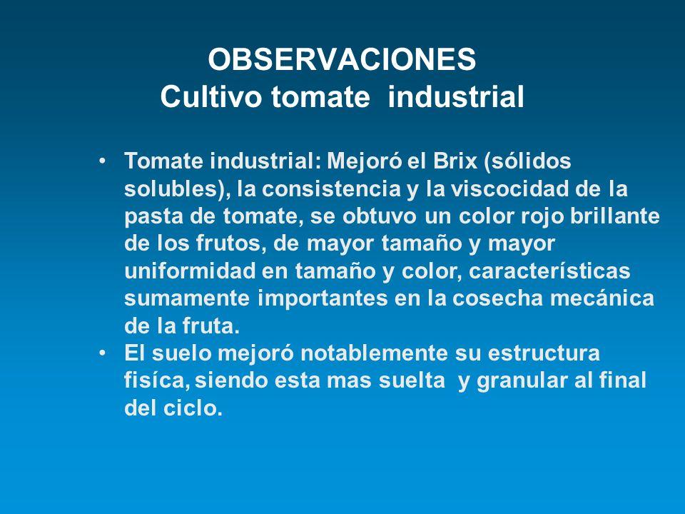 OBSERVACIONES Cultivo tomate industrial Tomate industrial: Mejoró el Brix (sólidos solubles), la consistencia y la viscocidad de la pasta de tomate, s