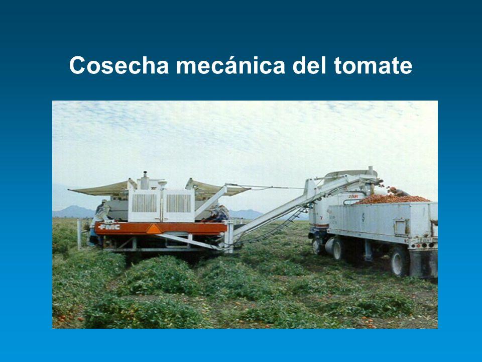 Cosecha mecánica del tomate