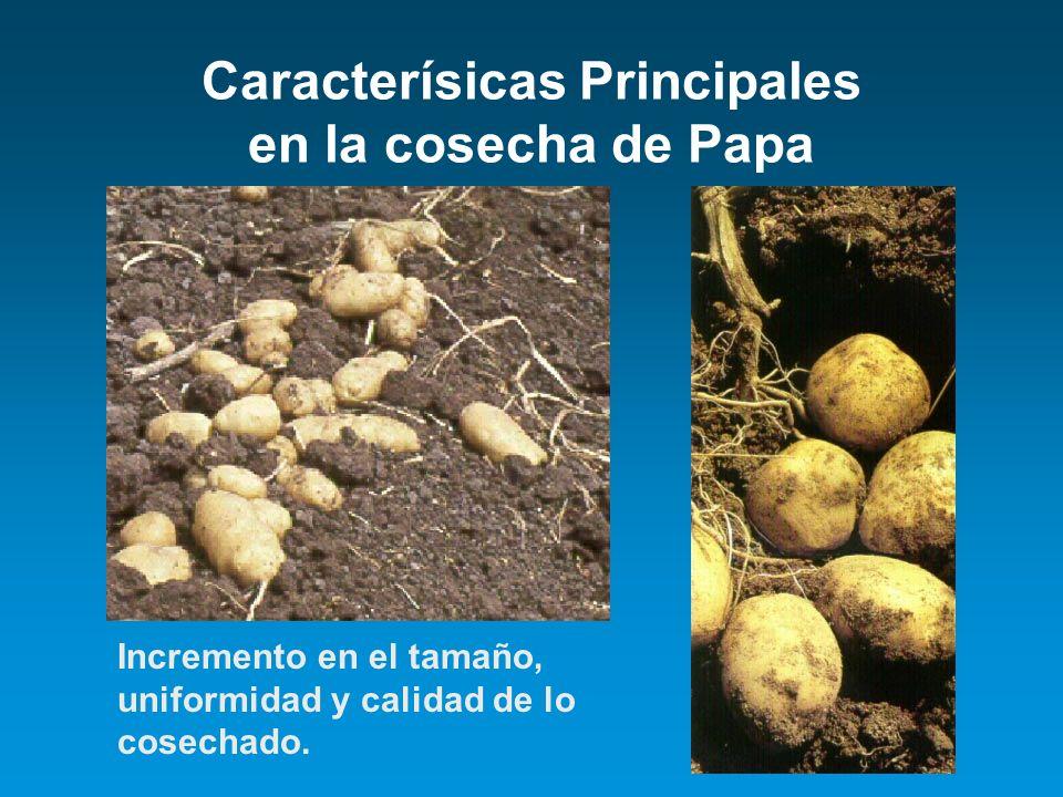 Caracterísicas Principales en la cosecha de Papa Incremento en el tamaño, uniformidad y calidad de lo cosechado.