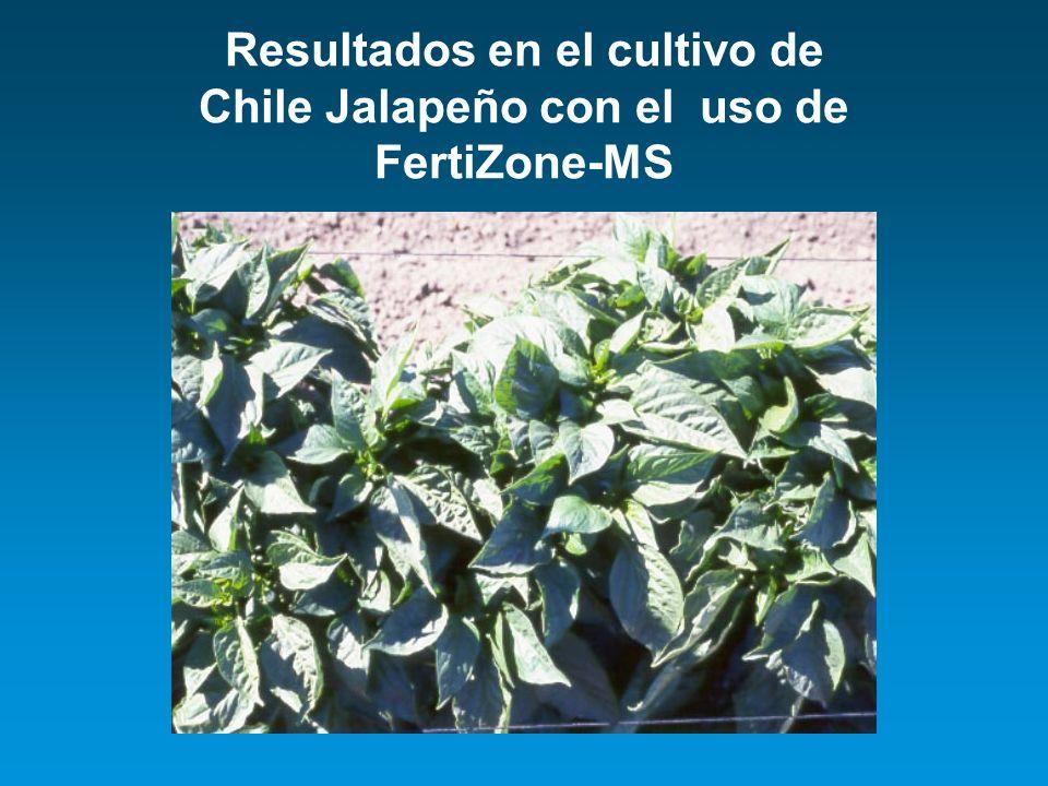 Resultados en el cultivo de Chile Jalapeño con el uso de FertiZone-MS