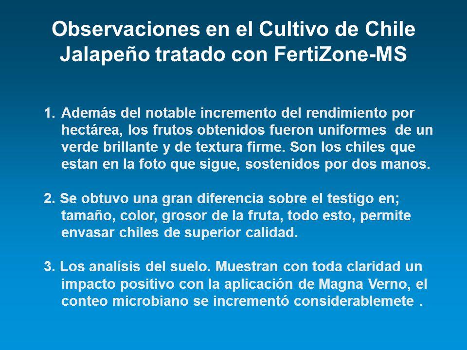 Observaciones en el Cultivo de Chile Jalapeño tratado con FertiZone-MS 1.Además del notable incremento del rendimiento por hectárea, los frutos obteni
