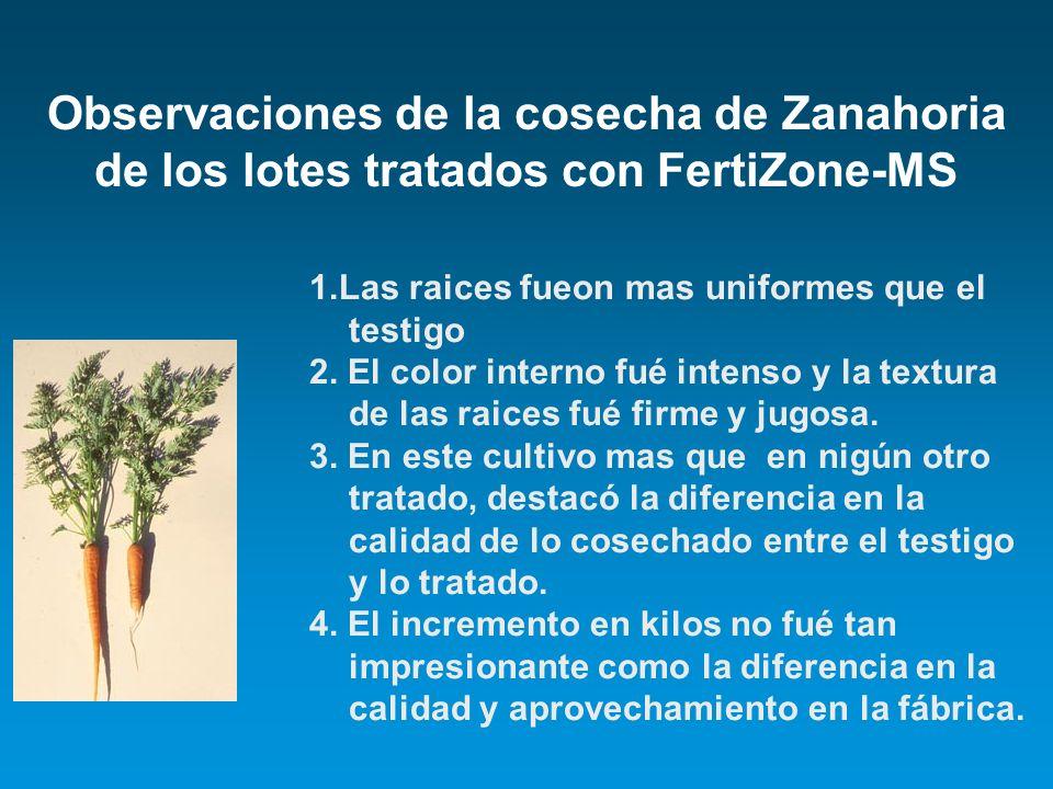Observaciones de la cosecha de Zanahoria de los lotes tratados con FertiZone-MS 1.Las raices fueon mas uniformes que el testigo 2. El color interno fu