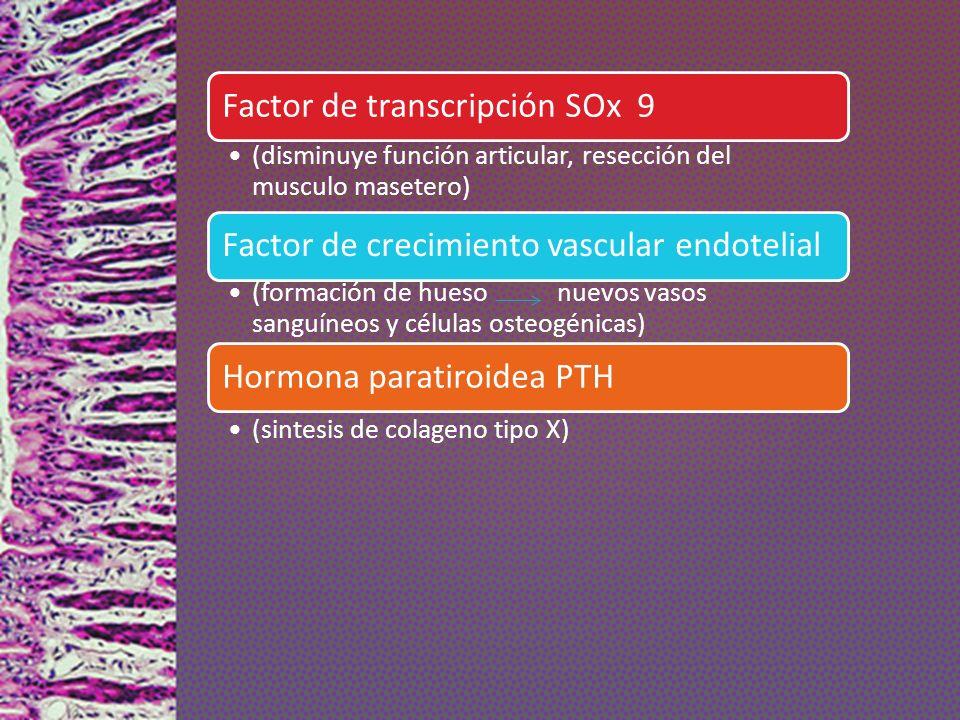Factor de transcripción SOx 9 (disminuye función articular, resección del musculo masetero) Factor de crecimiento vascular endotelial (formación de hu
