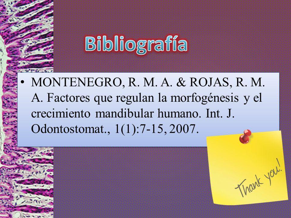 MONTENEGRO, R. M. A. & ROJAS, R. M. A. Factores que regulan la morfogénesis y el crecimiento mandibular humano. Int. J. Odontostomat., 1(1):7-15, 2007