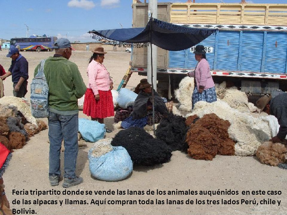 Aquí ya se esta siendo contaminada con los polvos que remueven las arenas ó tierra, trabajo que causa esta minera MINSUR Afectando el pastoreo de nuestros animales.