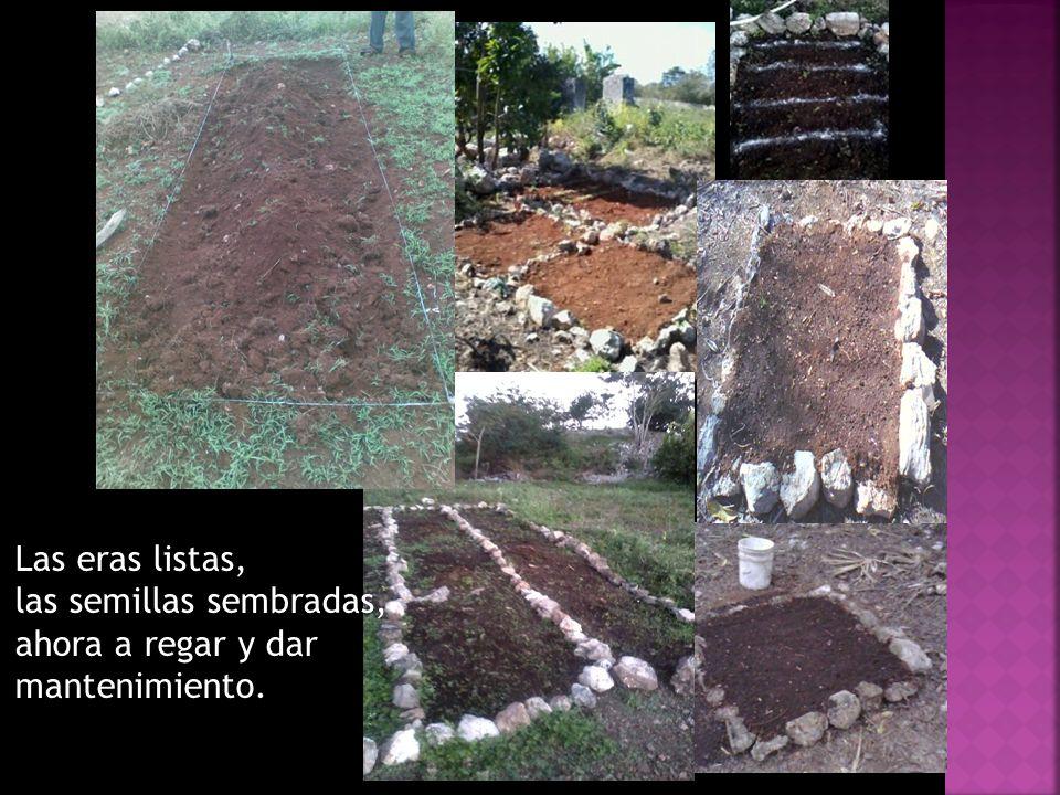 Las eras listas, las semillas sembradas, ahora a regar y dar mantenimiento.