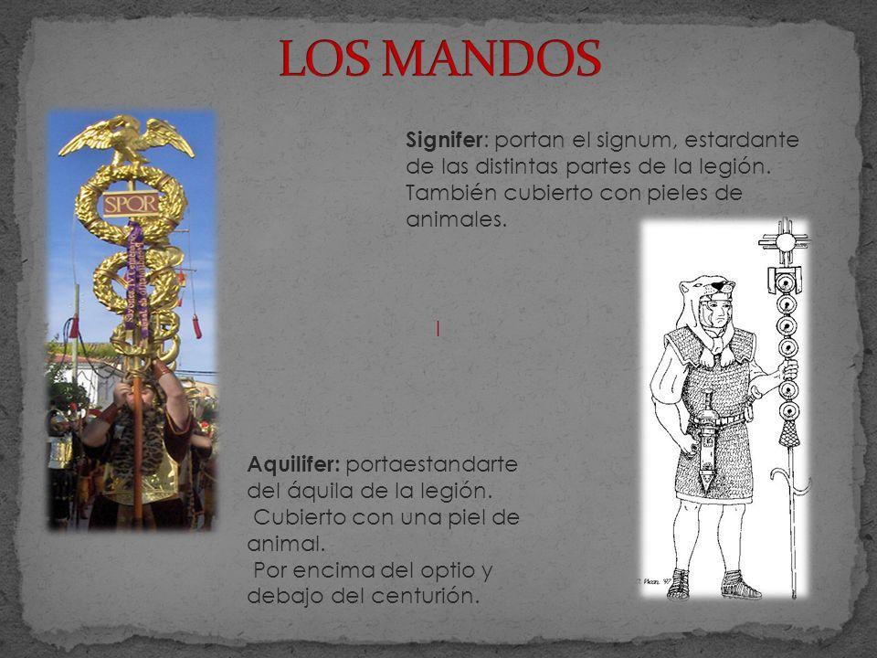 l Signifer : portan el signum, estardante de las distintas partes de la legión.