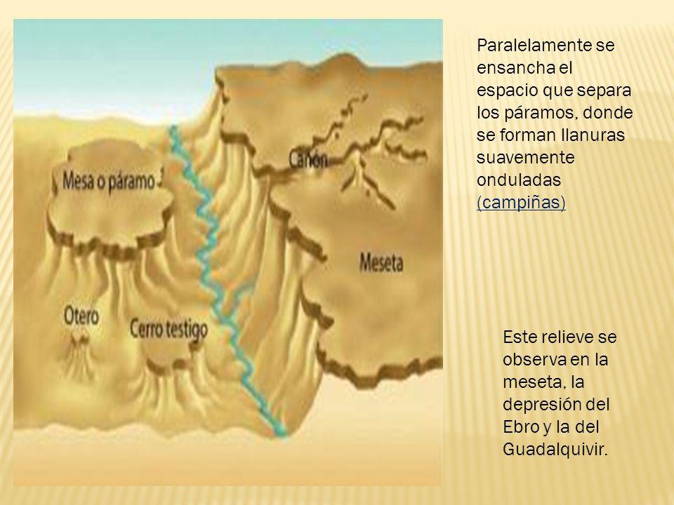 Paralelamente se ensancha el espacio que separa los páramos, donde se forman llanuras suavemente onduladas (campiñas) Este relieve se observa en la meseta, la depresión del Ebro y la del Guadalquivir.
