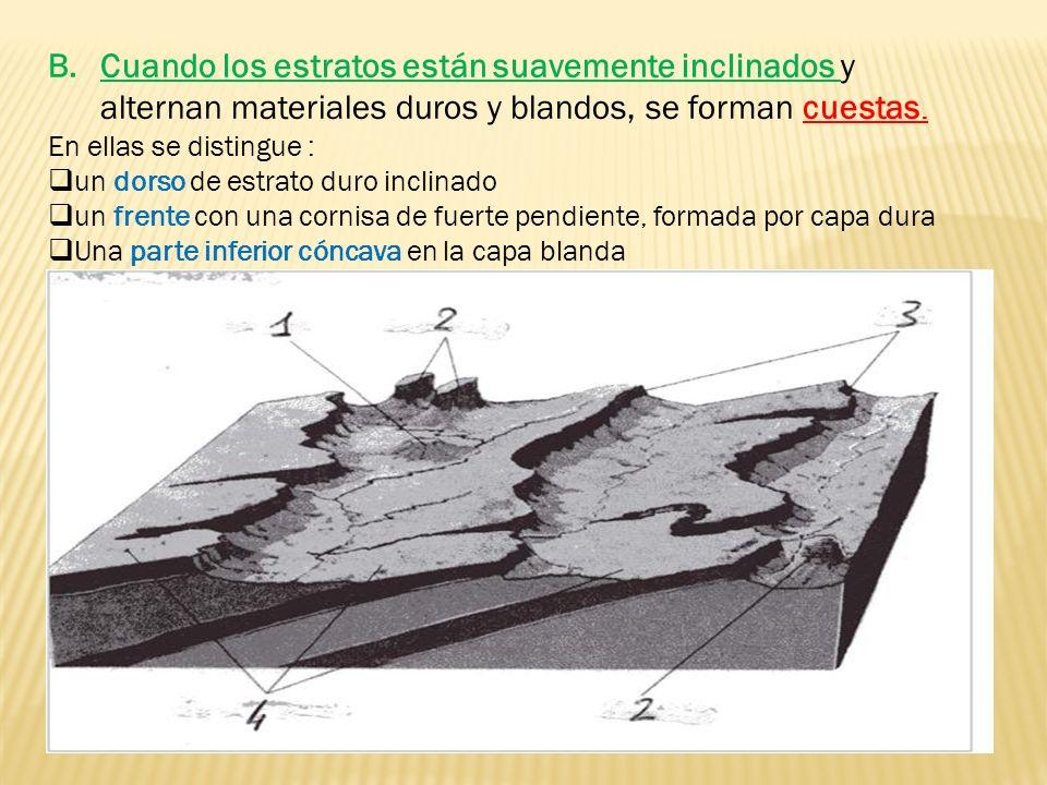 B.Cuando los estratos están suavemente inclinados y alternan materiales duros y blandos, se forman cuestas. En ellas se distingue : un dorso de estrat