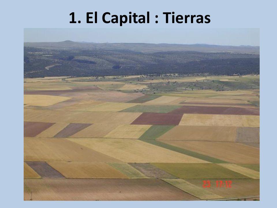 1. El Capital : Tierras