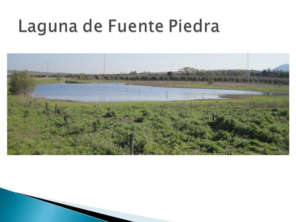 La Laguna de Fuente Piedra está en Antequera(Málaga).