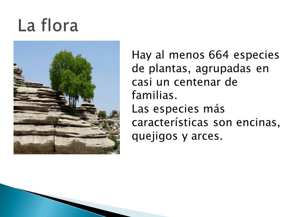 Hay al menos 664 especies de plantas, agrupadas en casi un centenar de familias.