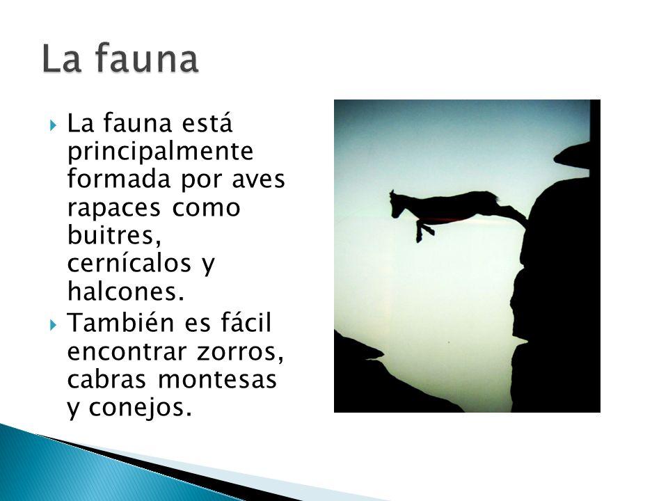 La fauna está principalmente formada por aves rapaces como buitres, cernícalos y halcones.