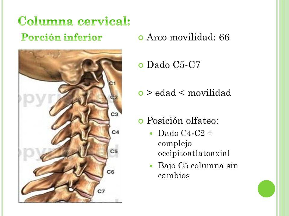 Arco movilidad: 66 Dado C5-C7 > edad < movilidad Posición olfateo: Dado C4-C2 + complejo occipitoatlatoaxial Bajo C5 columna sin cambios