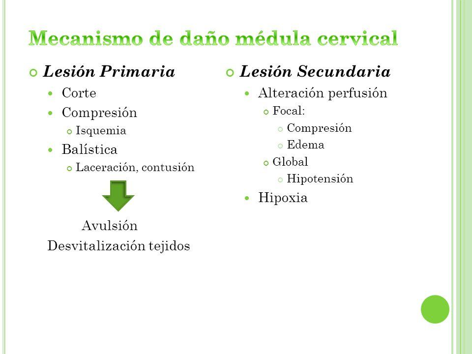 Lesión Primaria Corte Compresión Isquemia Balística Laceración, contusión Avulsión Desvitalización tejidos Lesión Secundaria Alteración perfusión Foca