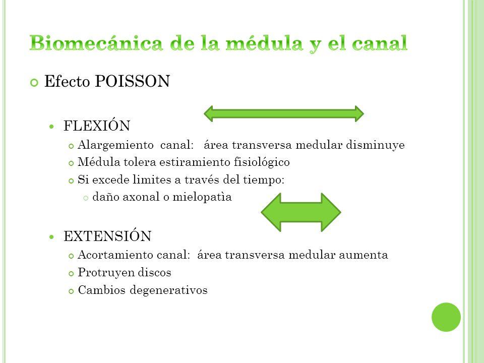 Efecto POISSON FLEXIÓN Alargemiento canal: área transversa medular disminuye Médula tolera estiramiento fisiológico Si excede limites a través del tie