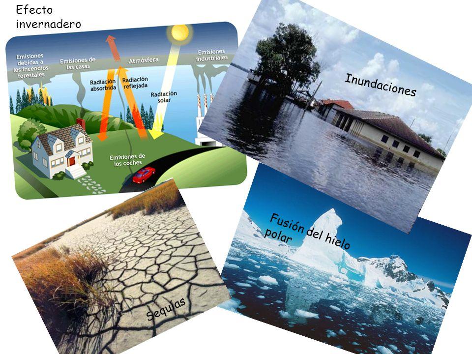 Efecto invernadero Sequías Inundaciones Fusión del hielo polar
