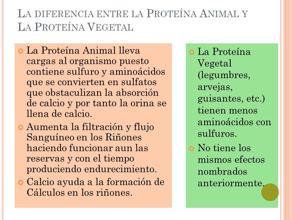 L A DIFERENCIA ENTRE LA P ROTEÍNA A NIMAL Y L A P ROTEÍNA V EGETAL La Proteína Animal lleva cargas al organismo puesto contiene sulfuro y aminoácidos