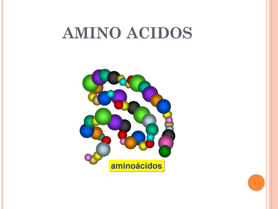 L OS A MINOÁCIDOS E SENCIALES Las Diferentes Proteínas se forman de diferentes combinaciones de Aminoácidos.