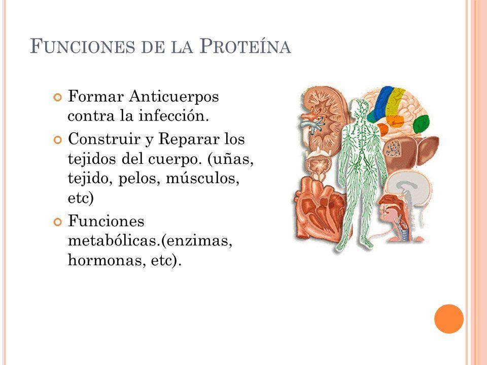 F UNCIONES DE LA P ROTEÍNA Formar Anticuerpos contra la infección. Construir y Reparar los tejidos del cuerpo. (uñas, tejido, pelos, músculos, etc) Fu