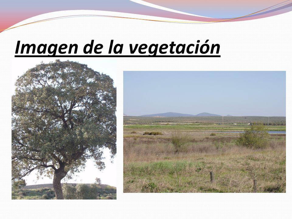 Torcal de Antequera Formación: El Torcal de Antequera se formo hace 160 millones de años y se formó gracias a la erosión de tanto tiempo.