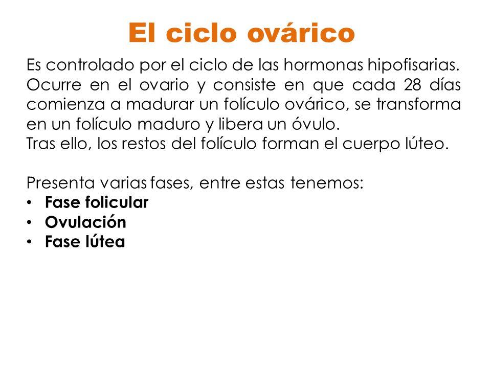 El ciclo ovárico Es controlado por el ciclo de las hormonas hipofisarias. Ocurre en el ovario y consiste en que cada 28 días comienza a madurar un fol