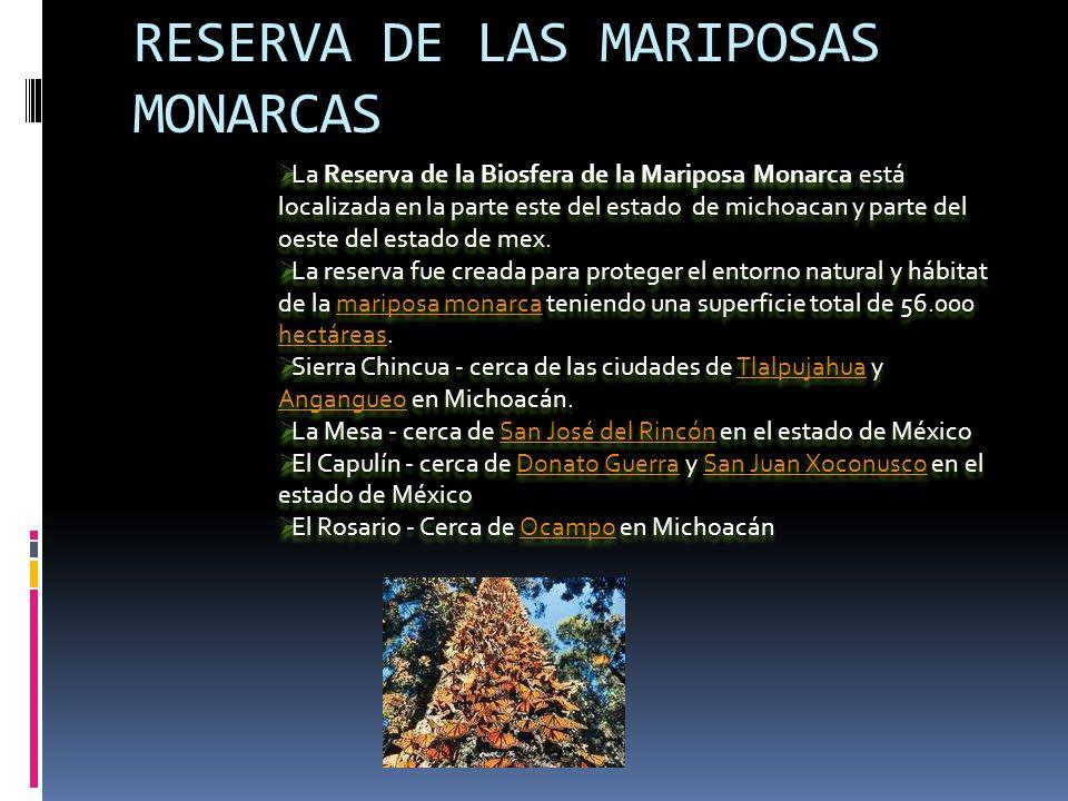 RESERVA DE LAS MARIPOSAS MONARCAS La Reserva de la Biosfera de la Mariposa Monarca está localizada en la parte este del estado de michoacan y parte del oeste del estado de mex.