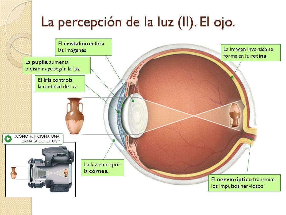 El ojo, al igual que una cámara fotográfica, produce imágenes invertidas y de menor tamaño, de los objetos, gracias a un sistema de lentes. Viaje que