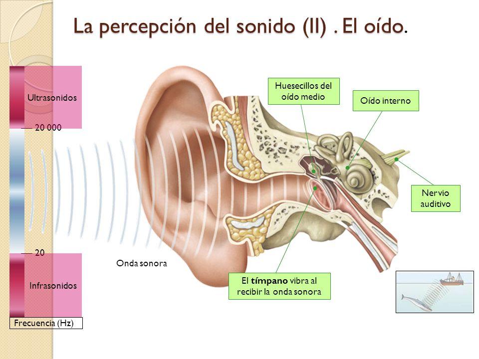 El oído humano solo es capaz de percibir sonidos con una frecuencia entre 20 y 20.000 Hz. Las ondas por debajo de 20 Hz se denominan INFRASONIDOS. Las