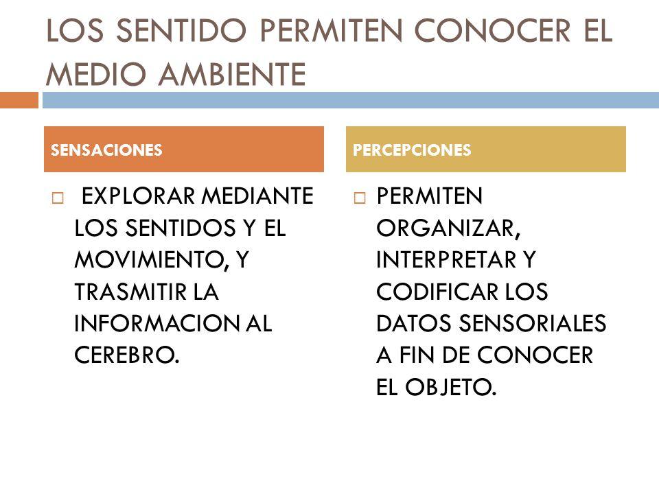 LOS SENTIDO PERMITEN CONOCER EL MEDIO AMBIENTE EXPLORAR MEDIANTE LOS SENTIDOS Y EL MOVIMIENTO, Y TRASMITIR LA INFORMACION AL CEREBRO.
