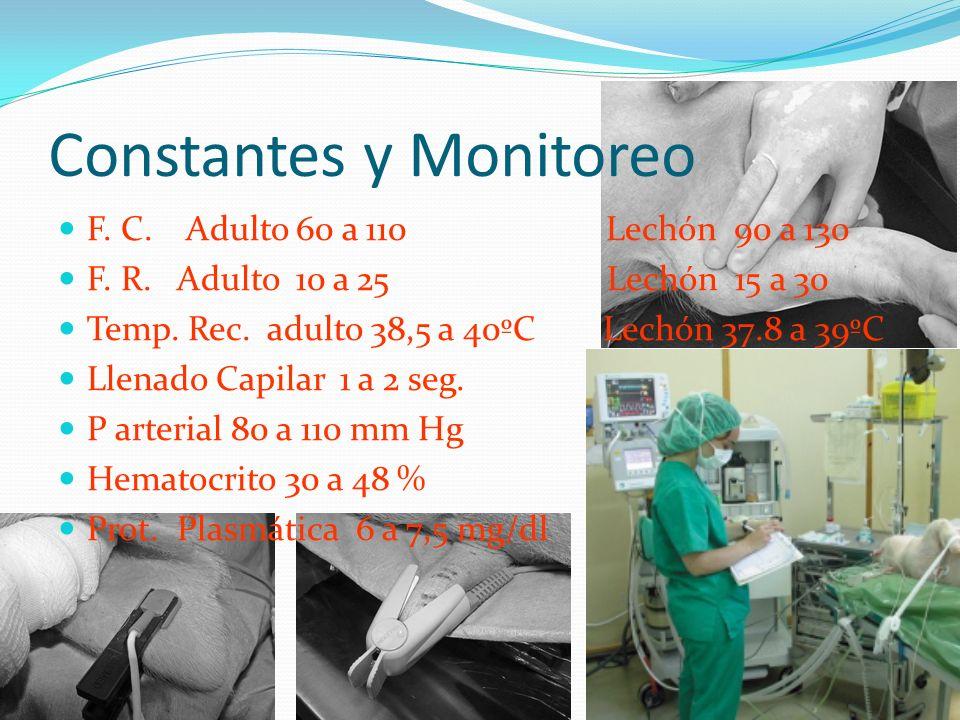 Constantes y Monitoreo F.C. Adulto 60 a 110 Lechón 90 a 130 F.