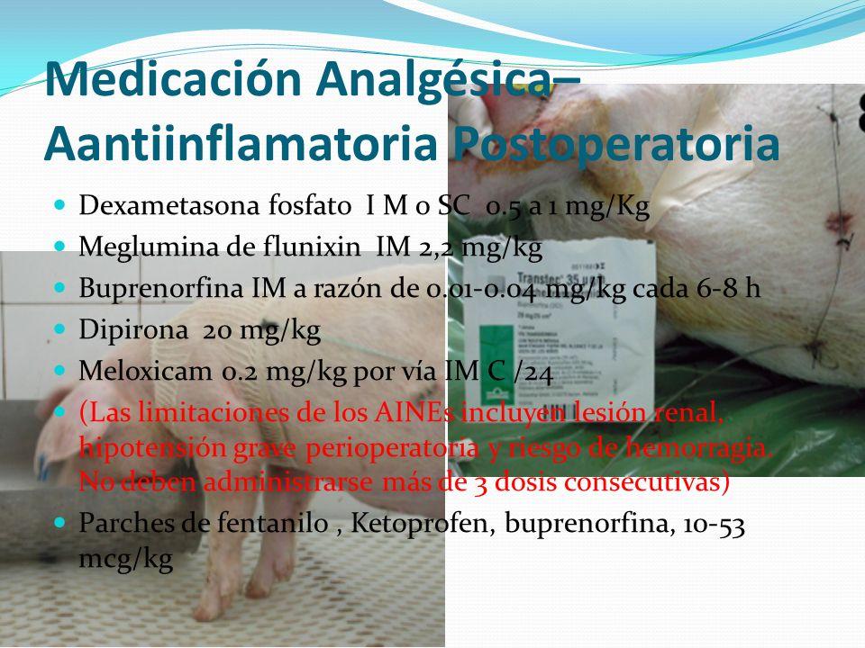 Medicación Analgésica– Aantiinflamatoria Postoperatoria Dexametasona fosfato I M o SC 0.5 a 1 mg/Kg Meglumina de flunixin IM 2,2 mg/kg Buprenorfina IM a razón de 0.01-0.04 mg/kg cada 6-8 h Dipirona 20 mg/kg Meloxicam 0.2 mg/kg por vía IM C /24 (Las limitaciones de los AINEs incluyen lesión renal, hipotensión grave perioperatoria y riesgo de hemorragia.