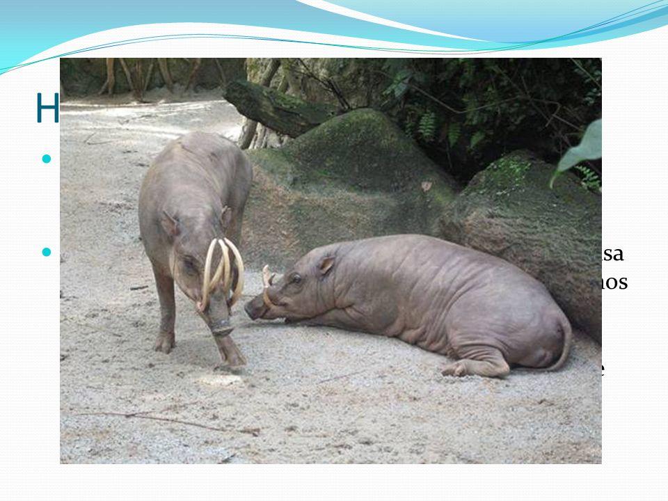 Historia y Evolución Las razas de los cerdos se derivaron de dos especies; Sus Scrofa (cerdo europeo) y Sus Vittatus (cerdo salvaje del este y sudeste de Asia).