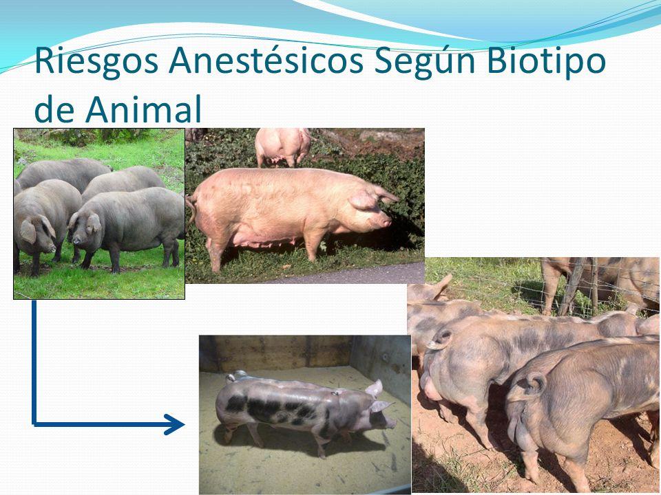 Preanestesia Ventajas: Facilitar la sujeción del animal.