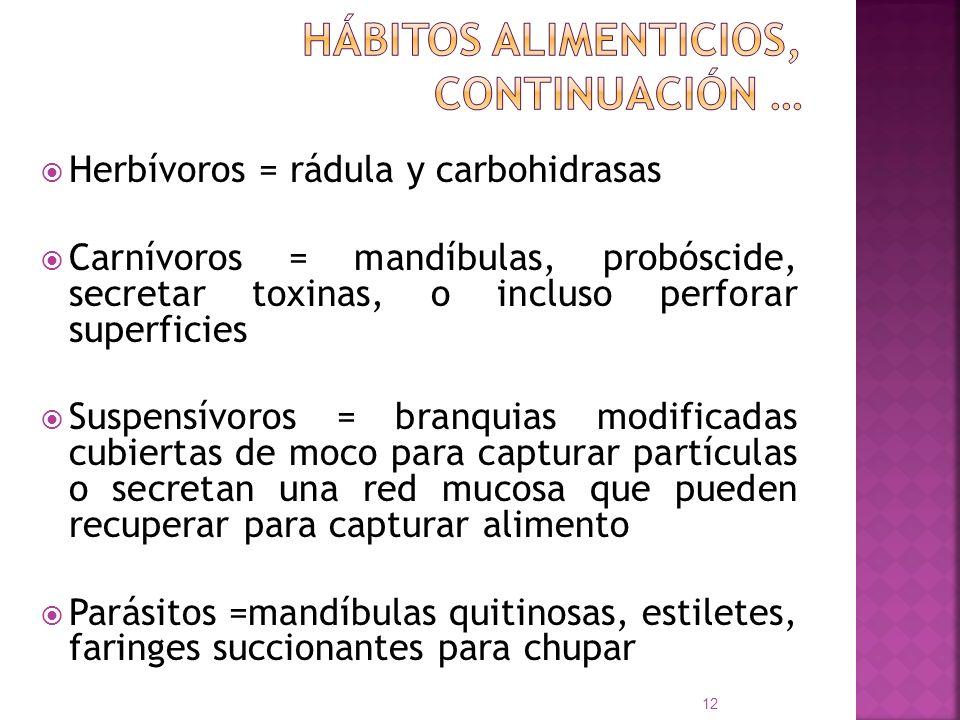 Herbívoros = rádula y carbohidrasas Carnívoros = mandíbulas, probóscide, secretar toxinas, o incluso perforar superficies Suspensívoros = branquias mo