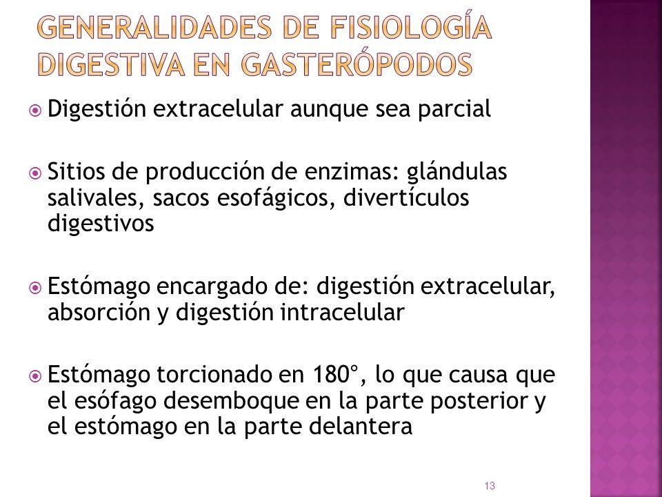 Digestión extracelular aunque sea parcial Sitios de producción de enzimas: glándulas salivales, sacos esofágicos, divertículos digestivos Estómago enc