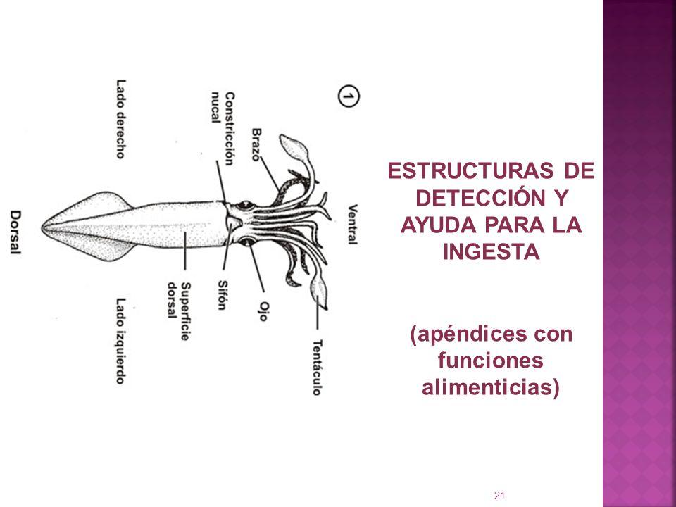 21 ESTRUCTURAS DE DETECCIÓN Y AYUDA PARA LA INGESTA (apéndices con funciones alimenticias)