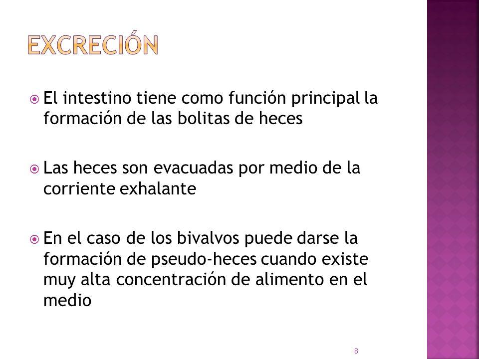 El intestino tiene como función principal la formación de las bolitas de heces Las heces son evacuadas por medio de la corriente exhalante En el caso