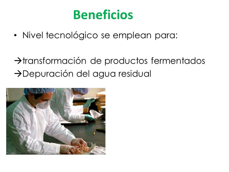 Beneficios Nivel tecnológico se emplean para: transformación de productos fermentados Depuración del agua residual
