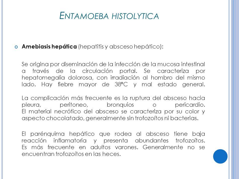 E NTAMOEBA HISTOLYTICA Amebiasis hepática (hepatitis y absceso hepático): Se origina por diseminación de la infección de la mucosa intestinal a través de la circulación portal.