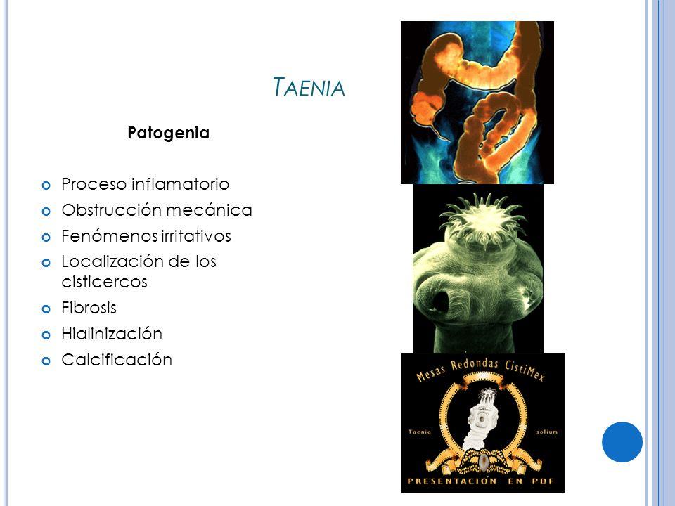T AENIA Patogenia Proceso inflamatorio Obstrucción mecánica Fenómenos irritativos Localización de los cisticercos Fibrosis Hialinización Calcificación