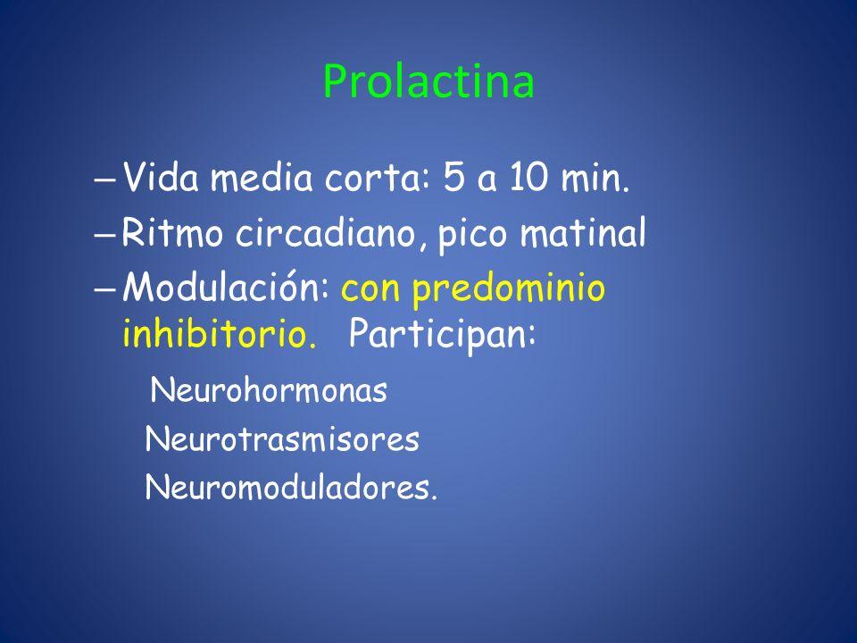 Prolactina – Vida media corta: 5 a 10 min. – Ritmo circadiano, pico matinal – Modulación: con predominio inhibitorio. Participan: Neurohormonas Neurot