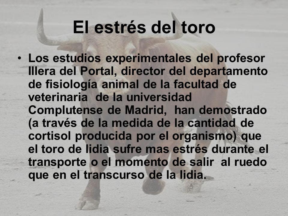 El estrés del toro Los estudios experimentales del profesor Illera del Portal, director del departamento de fisiología animal de la facultad de veteri