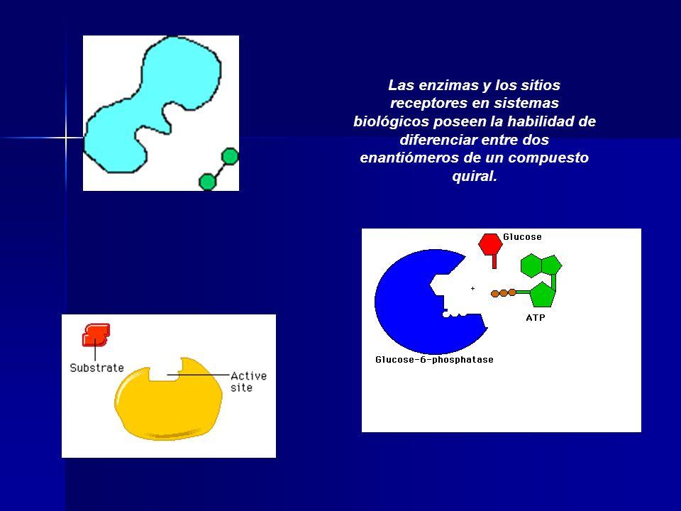 Las enzimas y los sitios receptores en sistemas biológicos poseen la habilidad de diferenciar entre dos enantiómeros de un compuesto quiral.
