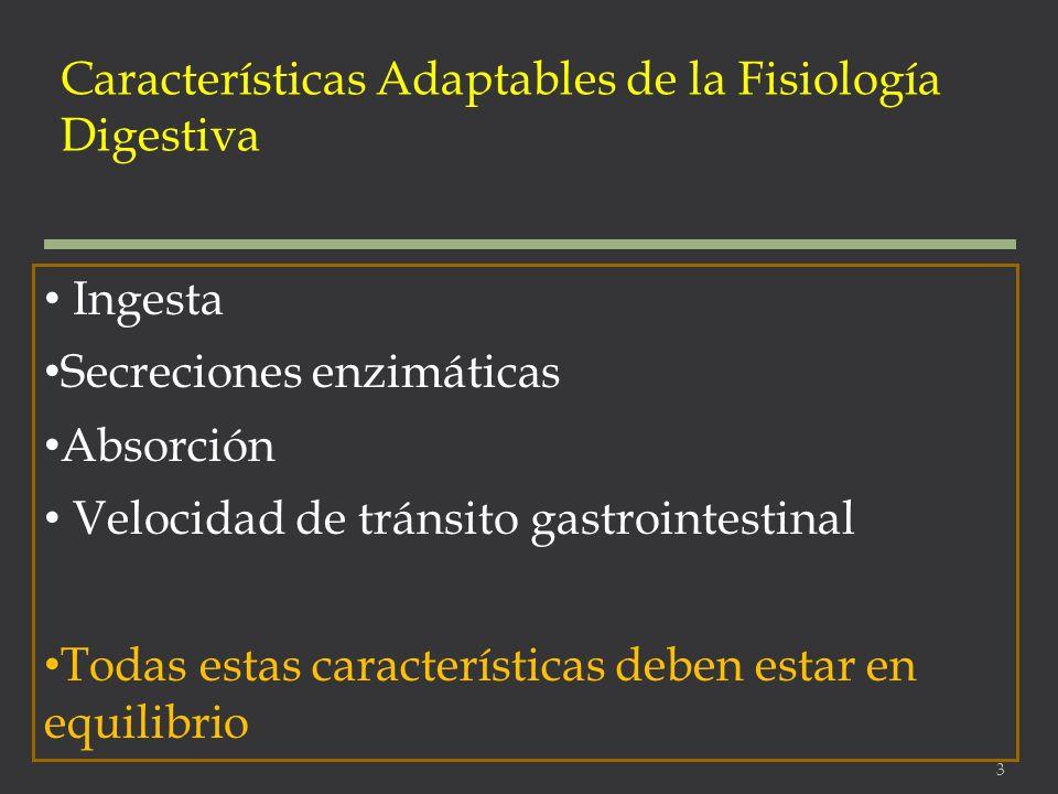 Características Adaptables de la Fisiología Digestiva Ingesta Secreciones enzimáticas Absorción Velocidad de tránsito gastrointestinal Todas estas car